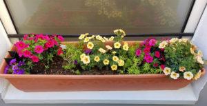sonnenhungrige Blumen