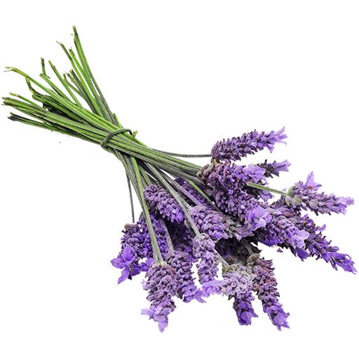 Wie Bekommt Man Verbrannten Geruch Aus Der Wohnung häufig gestellte fragen faq zusammengefasst • perfumum