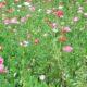 blumenwiese, die zum Frühjahrsputz mit Räuchern animiert